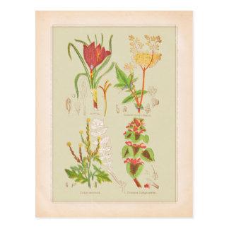 Bord I de Botanische Illustratie van de Kunst Briefkaart
