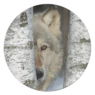bord met foto van grijze wolf in sommige berkbomen