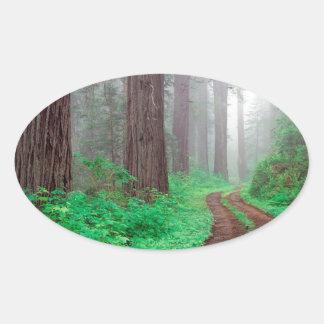 Bos Californische sequoia Ovale Sticker