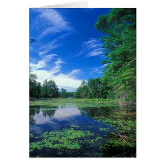Bos van de Staat Nipmuck van halsbrekende Bigelow Briefkaarten 0