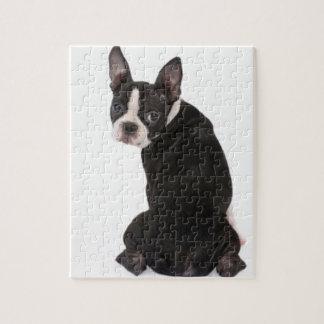 Boston Terrier die u bekijken Raadsel met de Doos Foto Puzzels