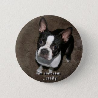 Boston Terrier:  Ik ben Onschuldig Ronde Button 5,7 Cm
