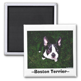 --Boston Terrier-- Vierkante Magneet