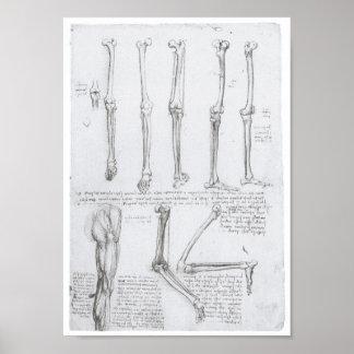 Bot van het Lagere Uiterste, Leonardo da Vinci Poster