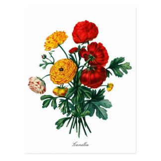 Botanische Camelia Bokeh Briefkaart