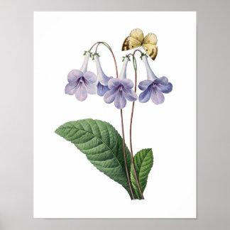 Botanische druk van BLAUWE KLOKKEN origineel door Poster