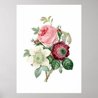 Botanische druk van ROZEN origineel door Redoute Poster