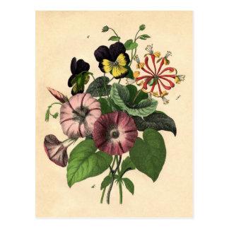 Botanische Druk - Viooltje & Kamperfoelie Briefkaart