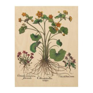 Botanische Kunst van Art. van de Muur van Basilius