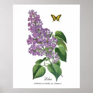 Botanische sering poster