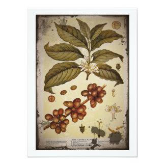 Botanische Tekening van het Plant van de Koffie Kaart