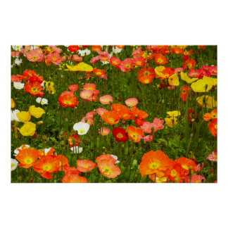 Botanische tuinen poster