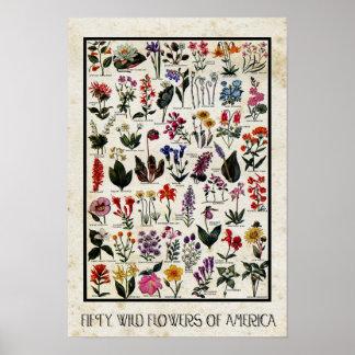 Botanische Wilde Bloemen van de Antiquiteit van Poster