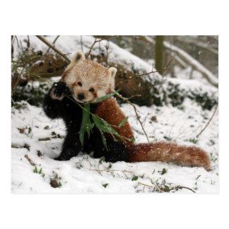 Briefkaart - rode panda 2