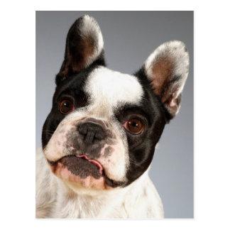 Briefkaart van de Hond van het Puppy van de Buldog