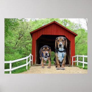 Brug van de Honden van de brak de Zandige Kreek Poster
