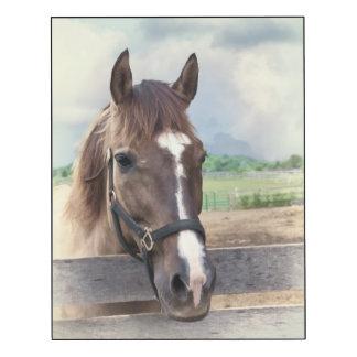 Bruin Paard in Paddock