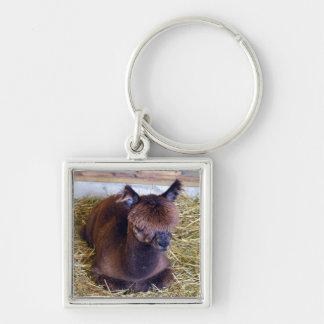 Bruine Alpaca Sleutelhanger