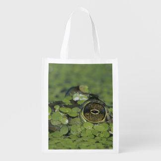 Brulkikvors, catesbeiana Rana, volwassen in Herbruikbare Boodschappentassen