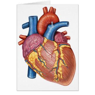 Bruto Anatomie van het Menselijke Hart Briefkaarten 0