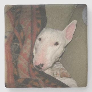 Bull terrier dat onder een Deken (Kleur) wordt Stenen Onderzetter