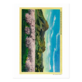 Buttes en de Boomgaarden van Sutter in Bloei Briefkaart