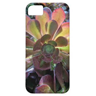 Cactus Barely There iPhone 5 Hoesje