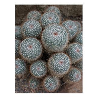 Cactus bij Botanische Tuinen Briefkaart