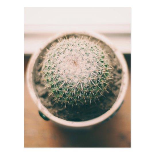 cactus briefkaart