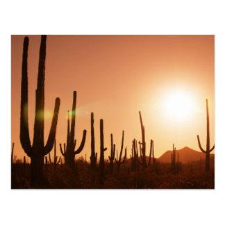 Cactus op Woestijn Briefkaart