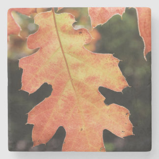 Californië, een de herfst gekleurd Eiken blad Stenen Onderzetter