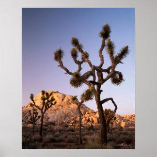 Californië, het Nationale Park van de Boom Joshua, Poster