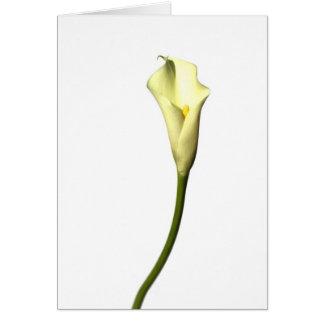 Calla van de lelie de Enige bloem van de Lelie op Wenskaart