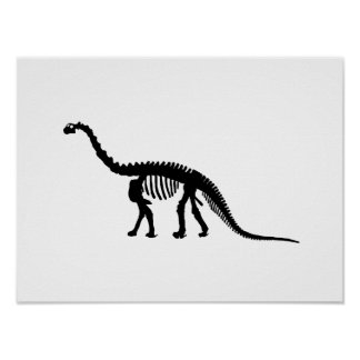 camarasaurus skelet poster