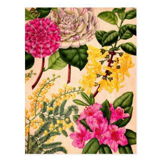 camelia, forsythia, rododendron en acacia briefkaart
