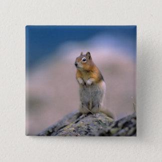 Canada, Alberta, Banff NP. Een gouden-Mantel Vierkante Button 5,1 Cm