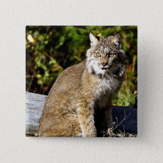 Canadese Lynx Vierkante Button 5,1 Cm