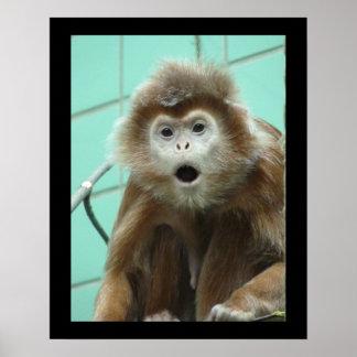 Capuchin het Poster van de Aap