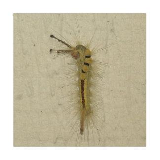 Caterpillar, de Houten Druk van de Foto Hout Afdruk