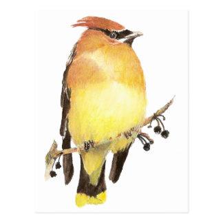 Ceder Waxwing, de Vogel van de Waterverf Briefkaart
