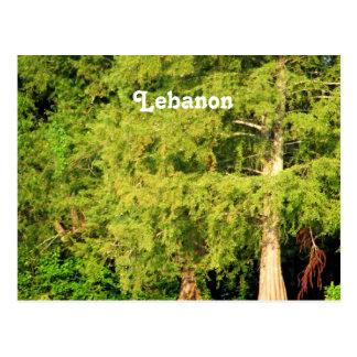 Ceders van Libanon Briefkaart