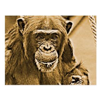Chimpansee 216 briefkaart