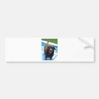 Chocolade Labrador dat pret in een zwembad heeft Bumpersticker