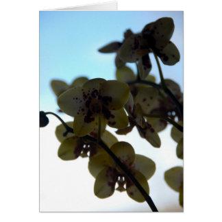 Clair DE Fleur Briefkaarten 0