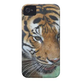Close-up van de Tijger van huren het Maleise iPhone 4 Hoesje