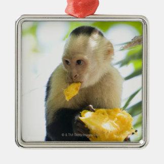 Close-up van een capuchin aap die een fruit eten zilverkleurig vierkant ornament