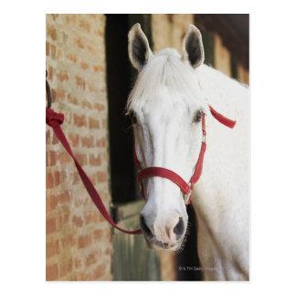 Close-up van een paard 2 briefkaart