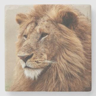 Close-up van mannelijke Leeuw Stenen Onderzetter