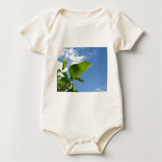 Close-up van okkernootblad door zonlicht wordt baby shirt