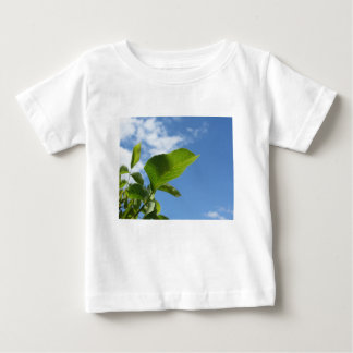 Close-up van okkernootblad door zonlicht wordt baby t shirts
